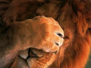 lion-triste