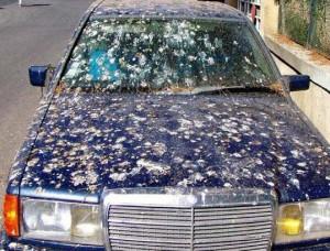 voiture sale